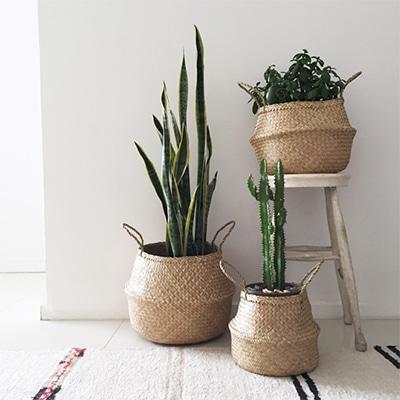 Paniers en osier avec des plantes vertes